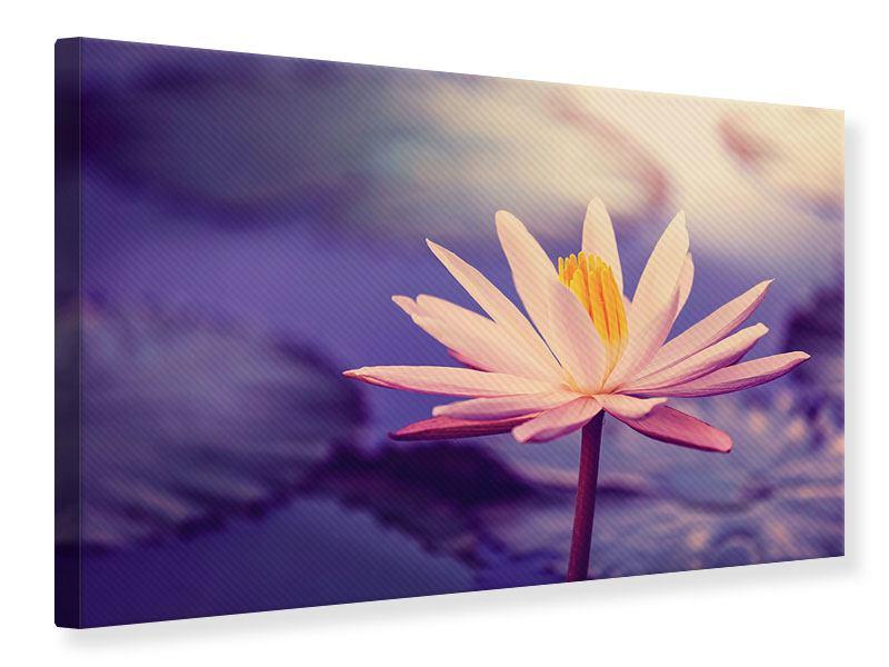 Leinwandbild Lotus bei Sonnenuntergang