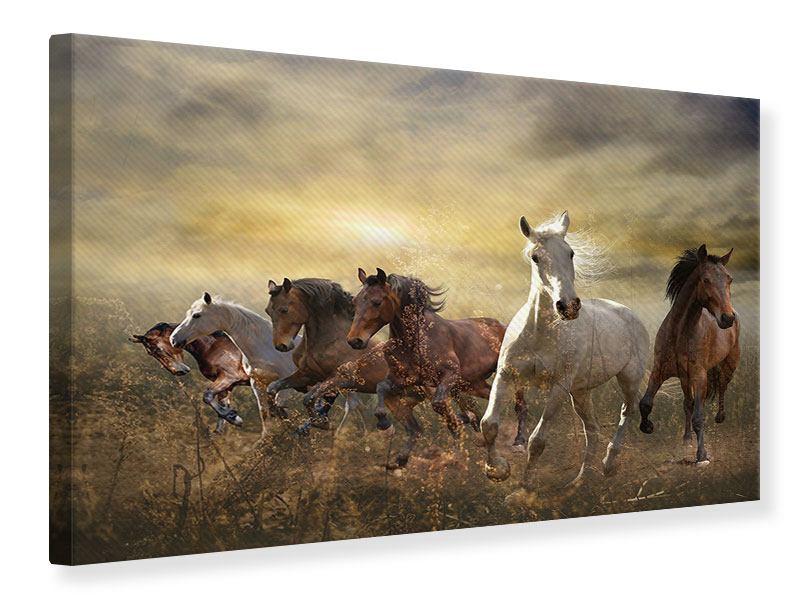 Leinwandbild Wilde Pferde