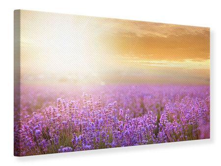 Leinwandbild Sonnenuntergang beim Lavendelfeld