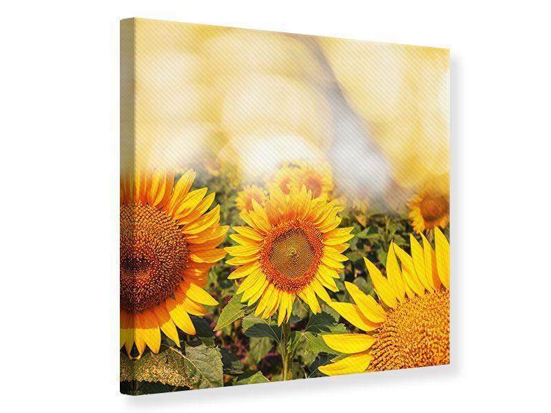 Leinwandbild Das Licht der Sonnenblumen