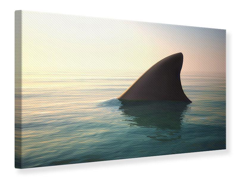Leinwandbild Haifischflosse