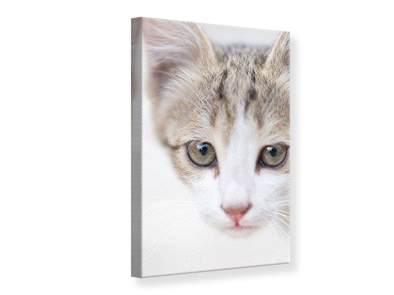 Leinwandbild Katzenkind