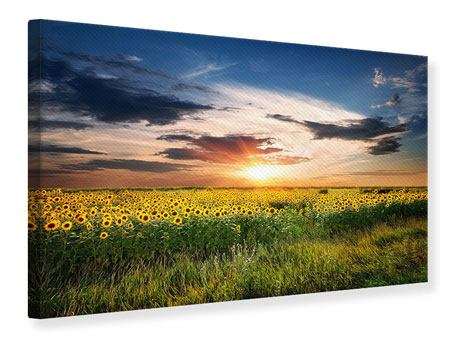 Leinwandbild Ein Feld von Sonnenblumen