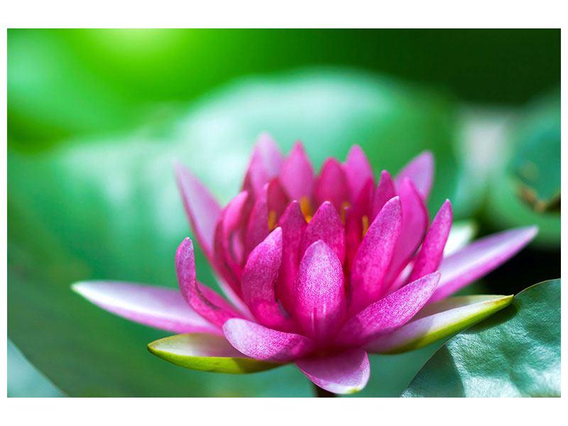 Leinwandbild Lotus in Pink