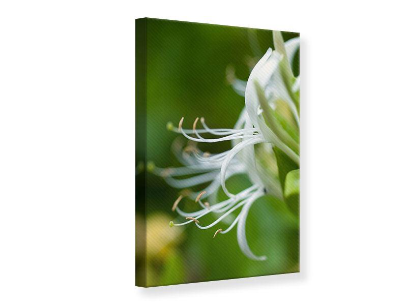 Leinwandbild Makro Blüte