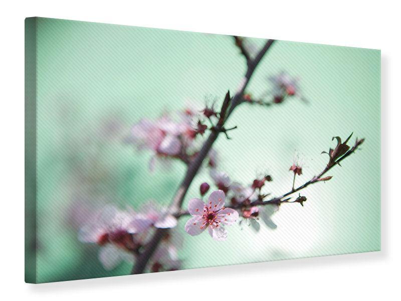 Leinwandbild Die japanische Kirschblüte