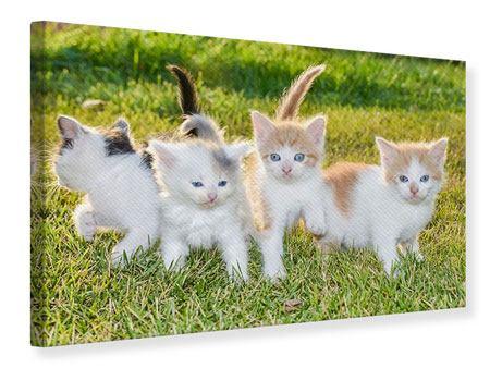 Leinwandbild Katzenbabys