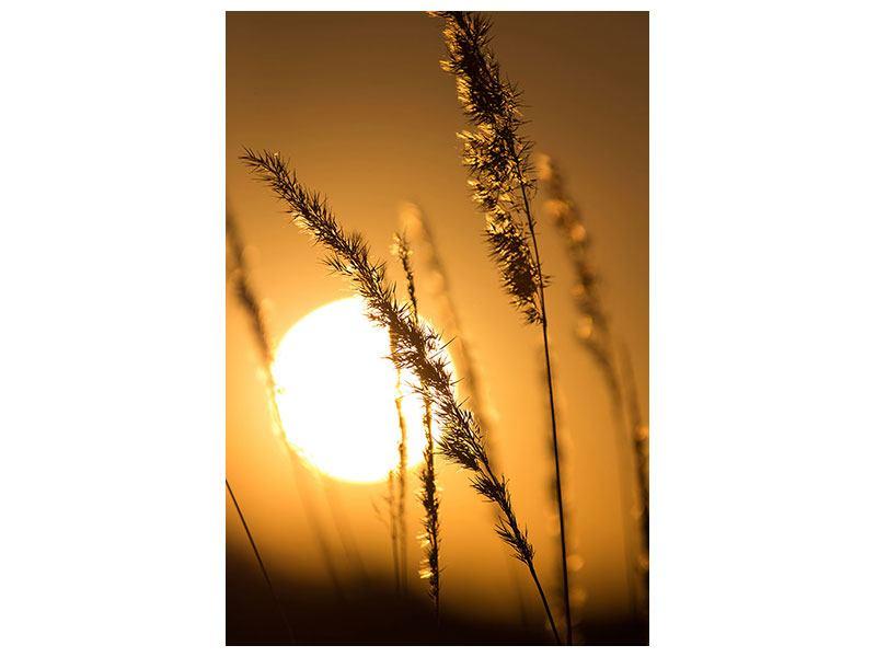 Leinwandbild Romantischer Sonnenuntergang