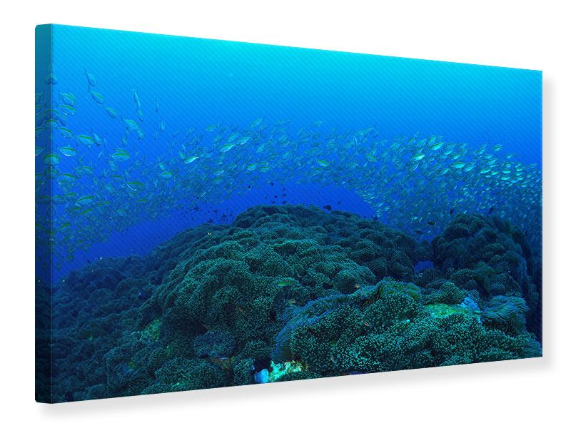 Leinwandbild Fischschwärme