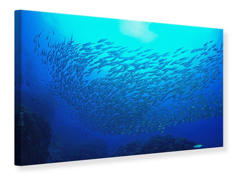 Leinwandbild Fischwelt