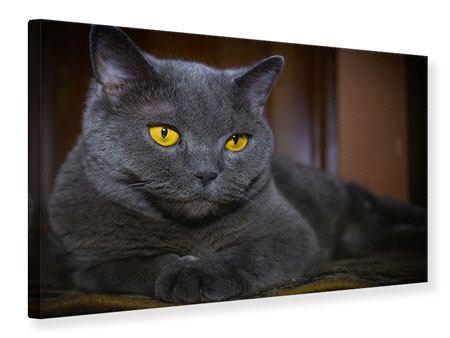 Leinwandbild Katzengöttin