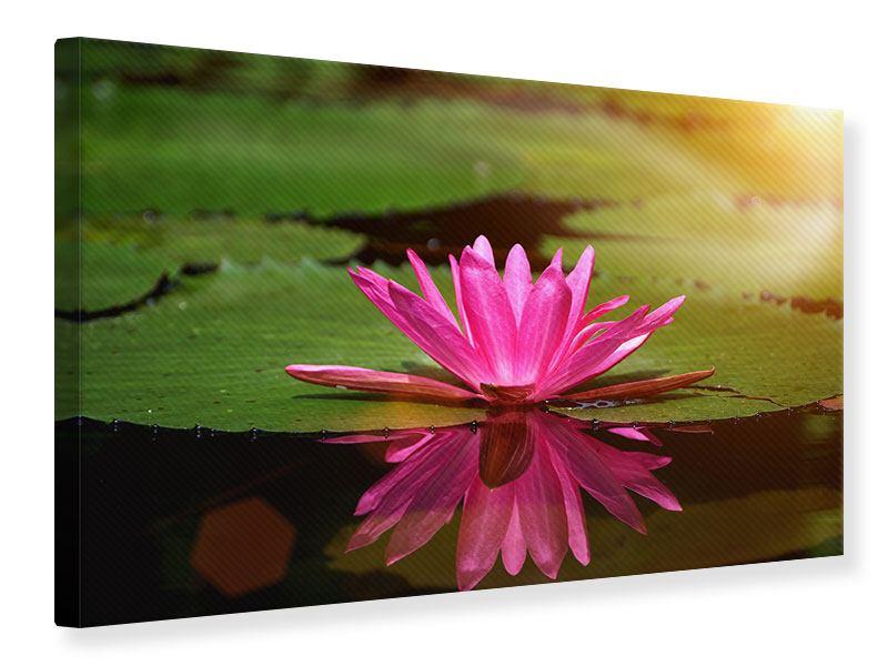 Leinwandbild Lotus im Wasser