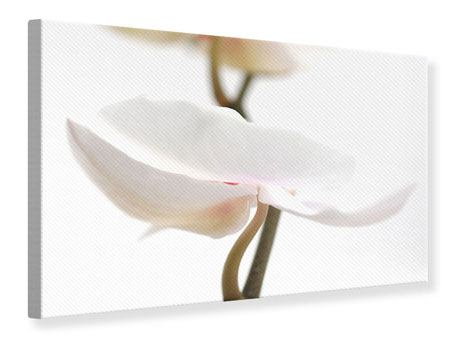 Leinwandbild XXL Orchideenblüte