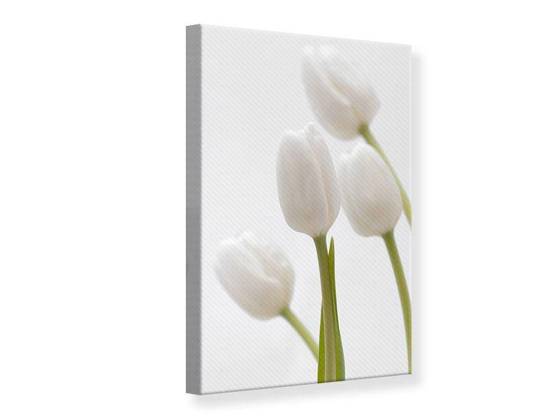 Leinwandbild Weisse Tulpen