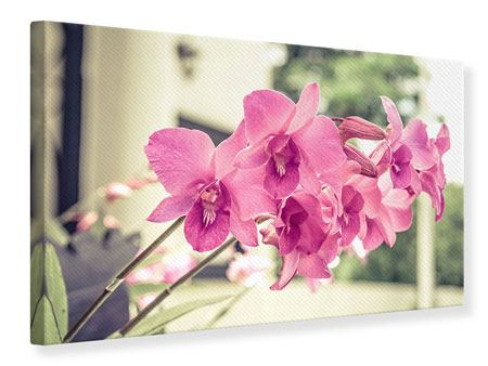 Leinwandbild Ein Fensterplatz für die Orchideen