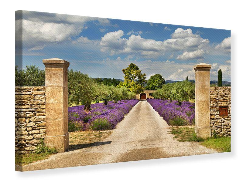 Leinwandbild Lavendel-Garten