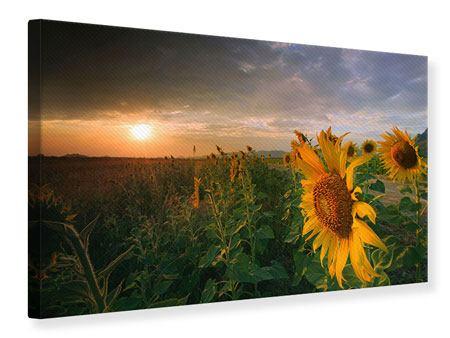 Leinwandbild Sonnenblumen im Lichtspiel
