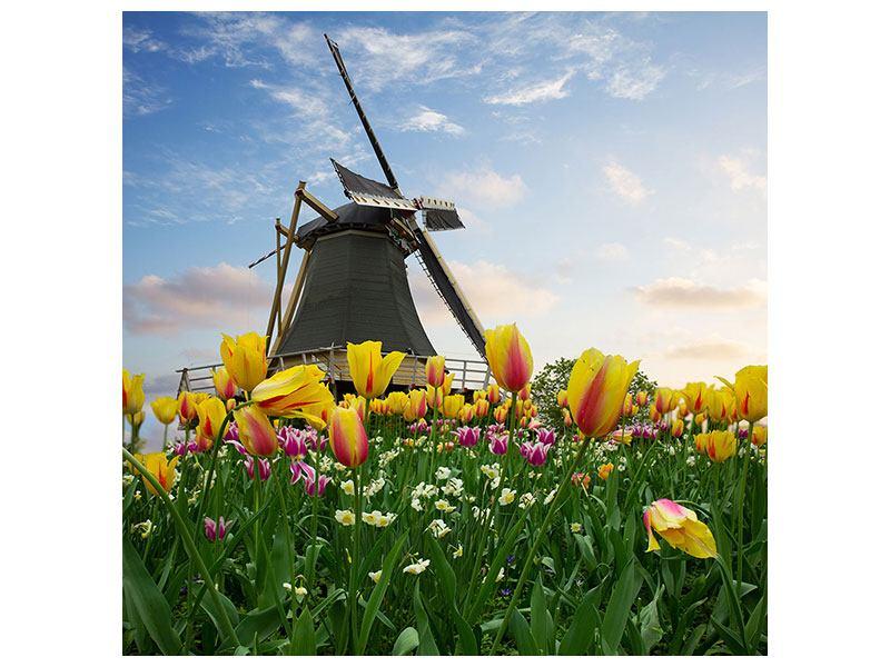 Leinwandbild Die Windmühle mit den Tulpen