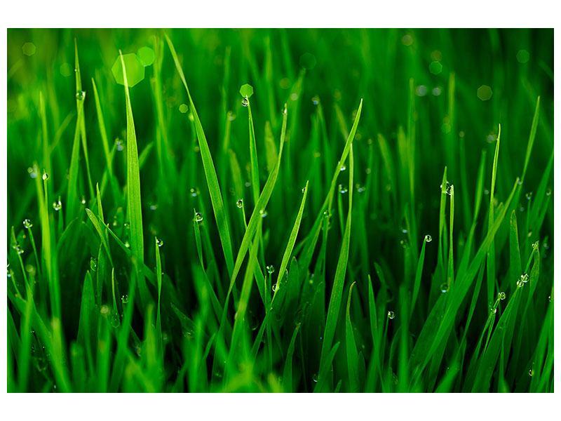 Leinwandbild Gras mit Morgentau