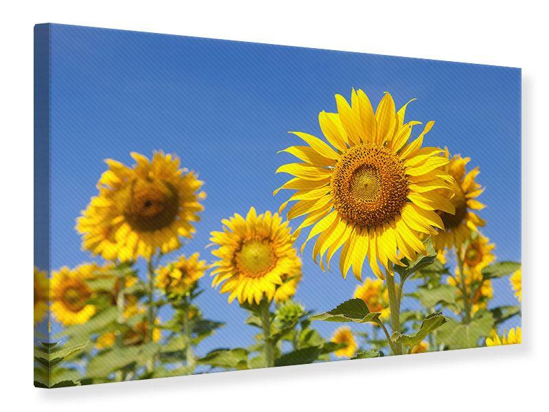 Leinwandbild Himmlische Sonnenblumen