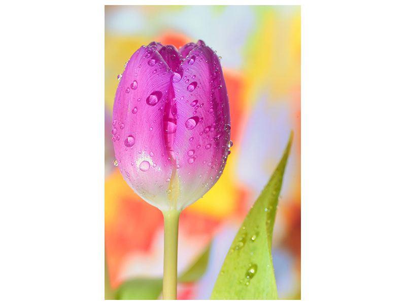 Leinwandbild Die Tulpe im Morgentau