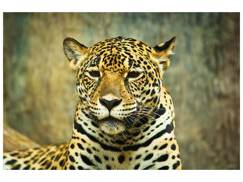 Leinwandbild Pantherportrait