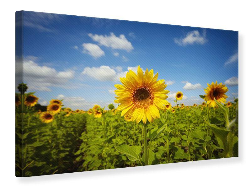 Leinwandbild Sommer-Sonnenblumen