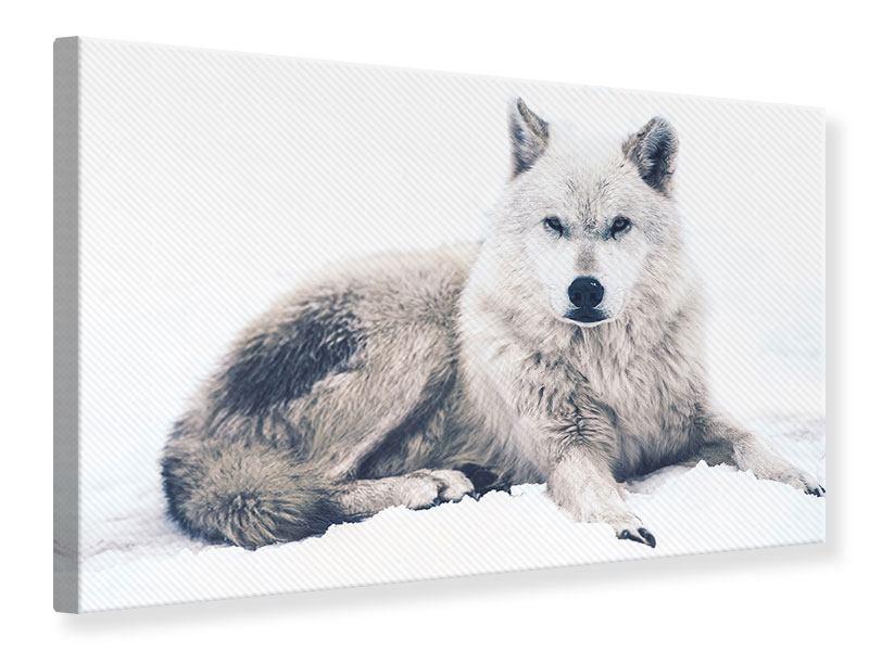 Leinwandbild Der Wolf