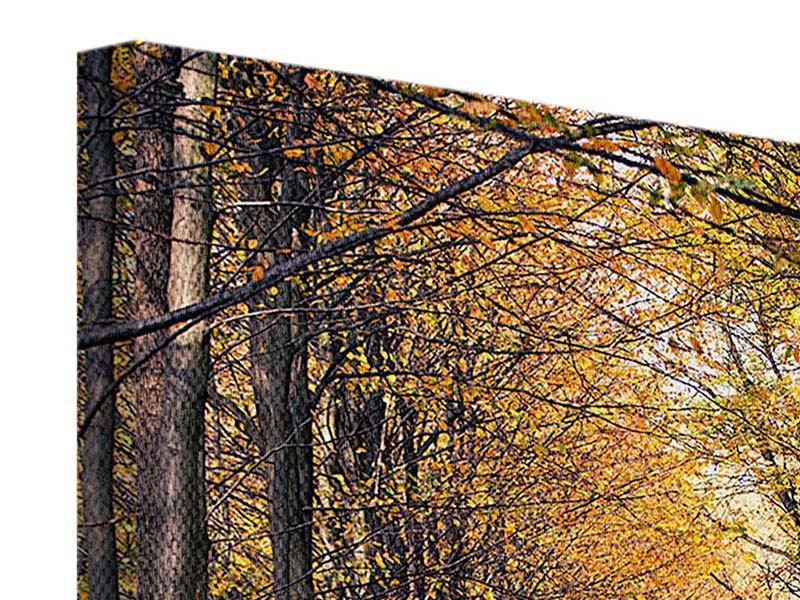 Leinwandbild Laubwald im Herbstlicht