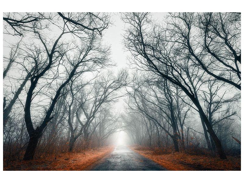 Leinwandbild Mysteriöse Stimmung im Wald