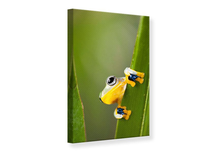 Leinwandbild Frosch