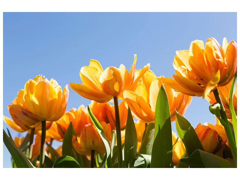Leinwandbild Märchenhafte Tulpen