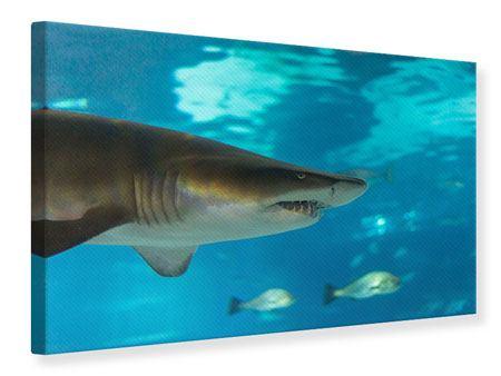 Leinwandbild Der Haifisch