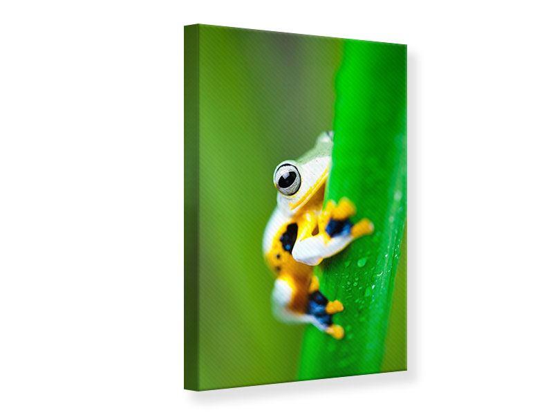 Leinwandbild Der Frosch