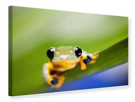 Leinwandbild Frosch XXL