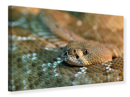 Leinwandbild Viper