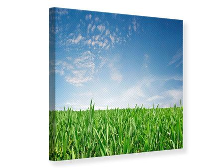 Leinwandbild Das Gras