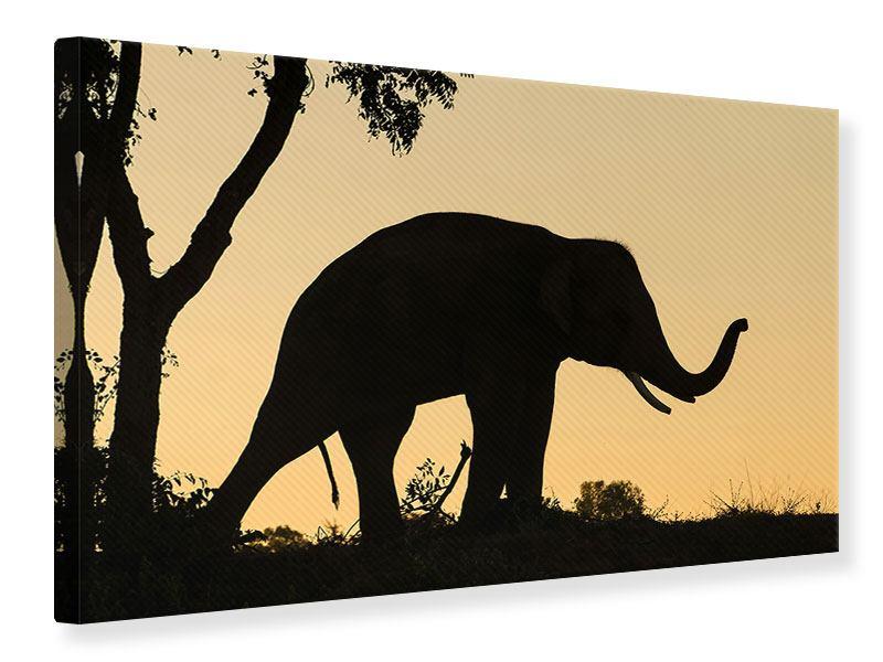 Leinwandbild Elefant an der Wand
