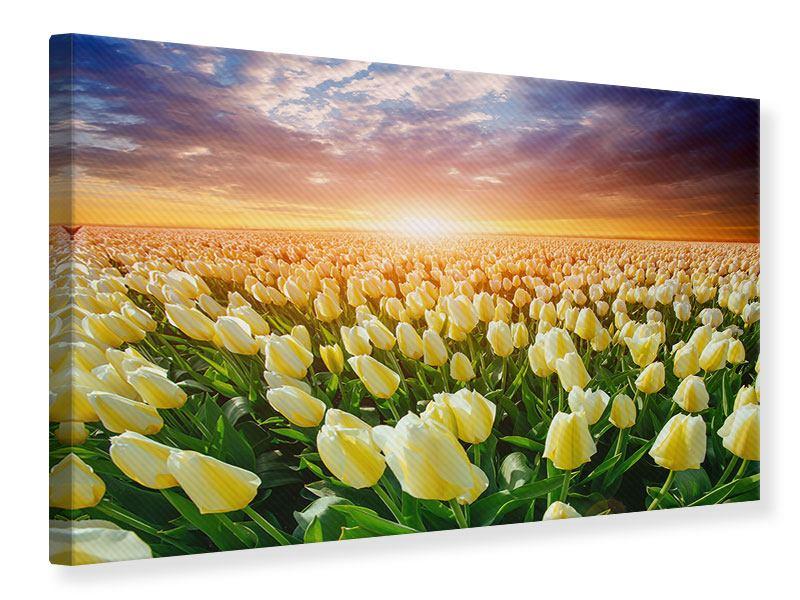 Leinwandbild Sonnenaufgang bei den Tulpen