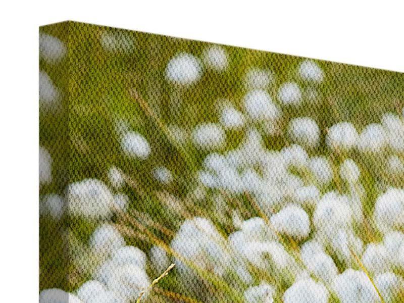 Leinwandbild Die Wiese der Baumwolle
