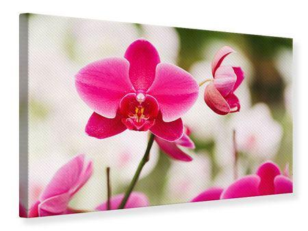 Leinwandbild Perspektivische Orchideen