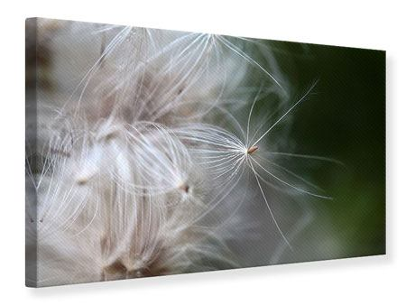 Leinwandbild Close up Blütenfasern
