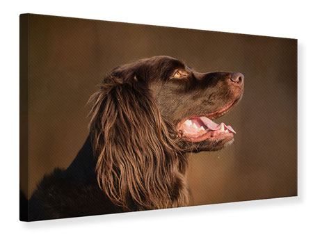 Leinwandbild Der Jagdhund im Profil