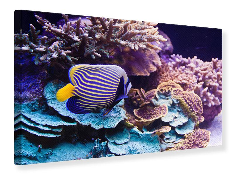 Leinwandbild Faszination Unterwasser
