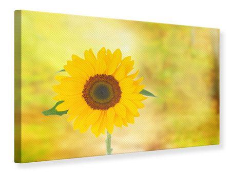 Leinwandbild Die Sonnenblume