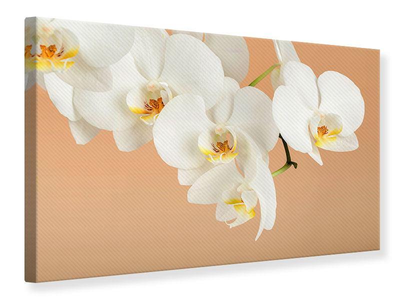 Leinwandbild Weisse Orchideenblüten