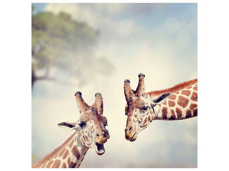 Leinwandbild Giraffen