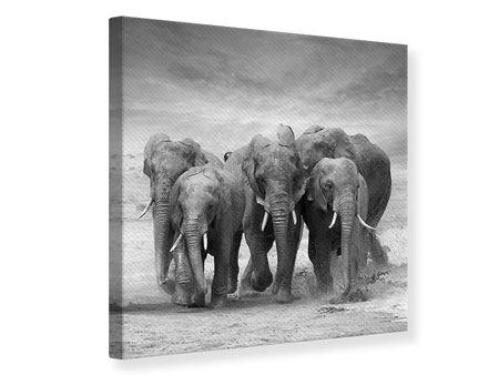 Leinwandbild Die Elefanten