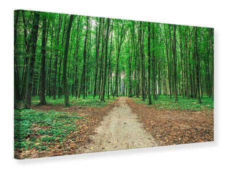 Leinwandbild Tannenwald