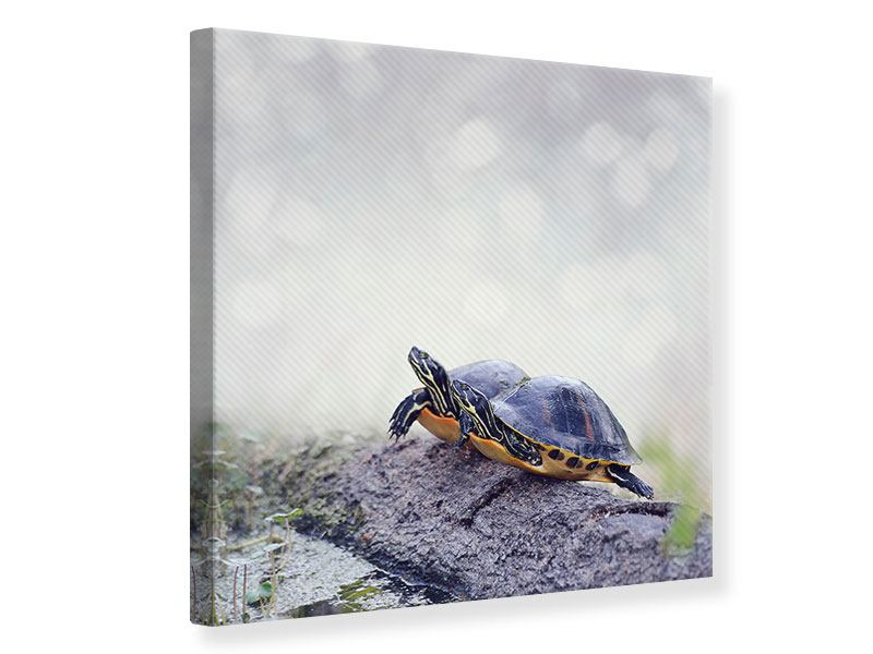 Leinwandbild Schildkrötenpaar